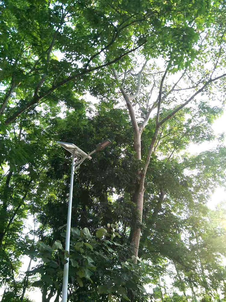 太阳能路灯_树底下的太阳能路灯_太阳能路灯安装